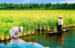 Diện mạo mới của nông nghiệp Cà Mau