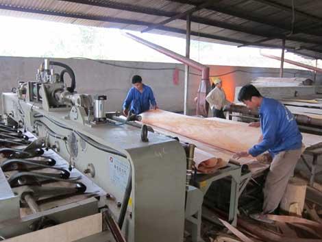 Công ty TNHH Thanh Bình: Đưa thương hiệu vươn xa