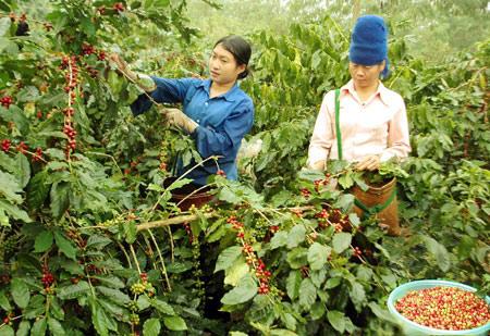 Huyện Mường Ảng: Hướng đi đúng đắn trong việc chuyển đổi cơ cấu cây trồng