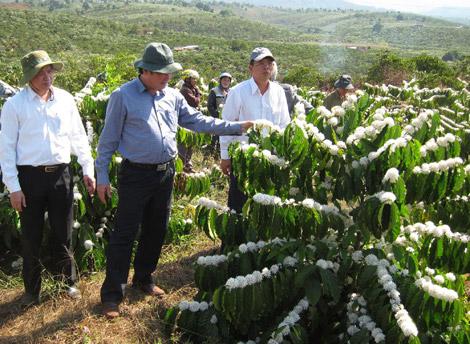Huyện Di Linh : tìm hướng đi mới cho phát triển ngành nông nghiệp