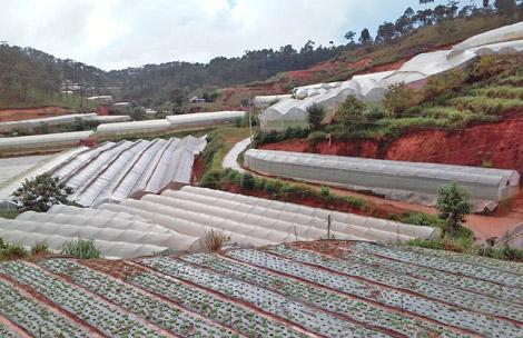Huyện Đơn Dương: Phát triển công nghiệp chế biến, tạo điều kiện phát triển toàn diện.