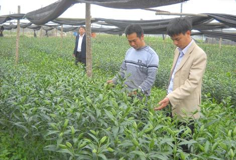 Huyện Thạch Thất: Đẩy mạnh xây dựng nông thôn mới