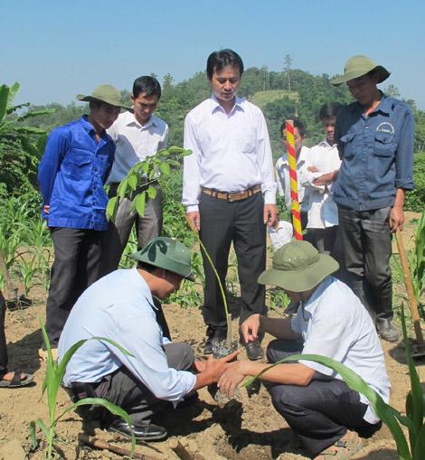 Huyện Tuần Giáo: Tập trung quy hoạch và phát triển cây công nghiệp