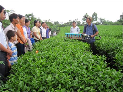 Huyện Yên Sơn: Phát triển kinh tế bền vững