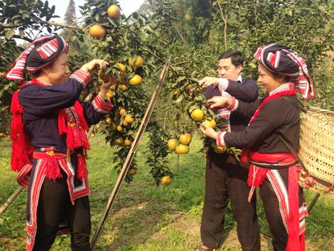 Huyện Hàm Yên: Đi đúng hướng trong phát triển kinh tế