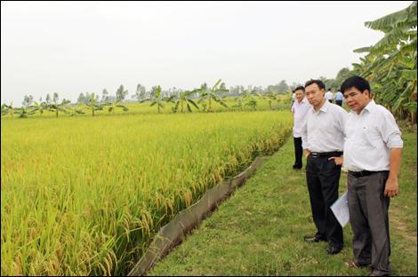 Huyện Ân Thi: Những triển vọng đột phá mới