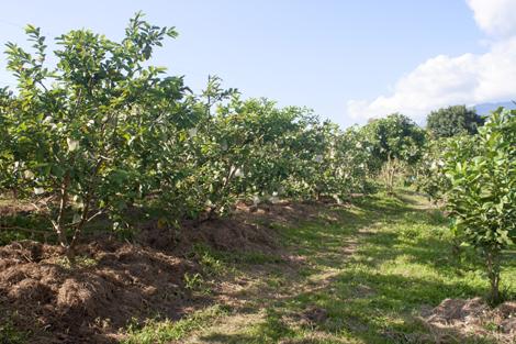 Huyện Tân Uyên: Phát huy thế mạnh nông lâm nghiệp