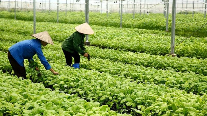 Bất động sản nông nghiệp: Tiềm năng lớn còn bỏ ngỏ