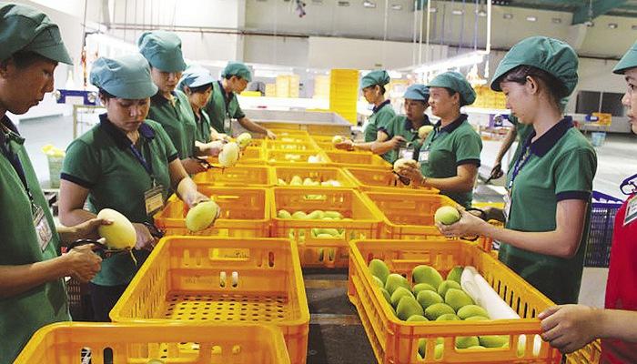 Để nông sản Việt trụ vững tại thị trường châu Âu
