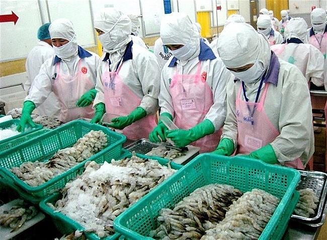 Xuất khẩu giảm, EU vẫn là thị trường tiềm năng của tôm Việt