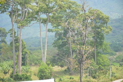 Vườn Quốc gia Phước Bình: Tiềm năng du lịch  cần sớm được đánh thức
