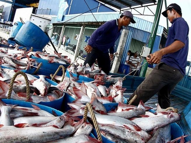 Cá tra Việt Nam: Rộng đường vào thị trường Hoa Kỳ