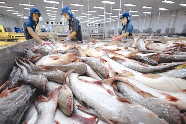 Xuất khẩu cá tra sẽ đạt 2,3 tỷ USD