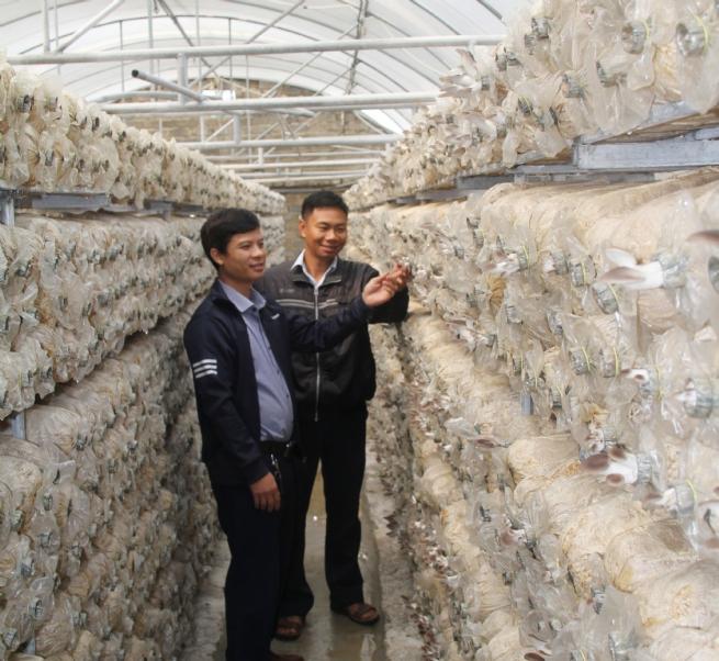 Hợp tác xã nông sản hữu cơ Trúc Phượng: Làm giàu  từ trồng nấm