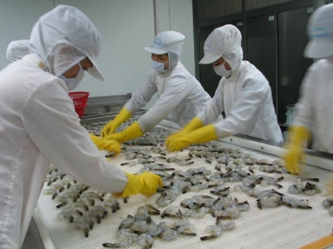 Tận dụng các FTA, tôm Việt tăng xuất khẩu sang Nhật