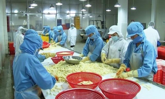 Giải pháp bền vững cho xuất khẩu nông sản