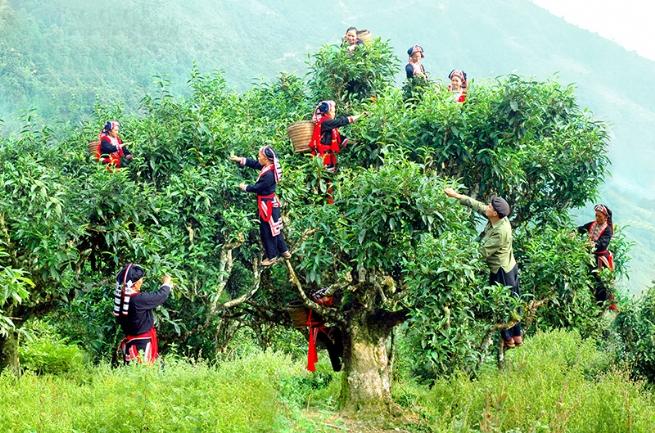 Ngành Công thương Hà Giang: Tích cực hỗ trợ doanh nghiệp