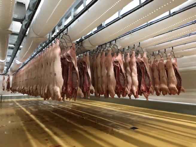 Tăng cường nhập khẩu, bình ổn giá thịt lợn trong dịp Tết Nguyên đán