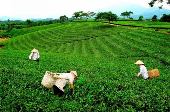 Tỉnh Thái Nguyên: Đẩy mạnh phát triển sản phẩm OCOP