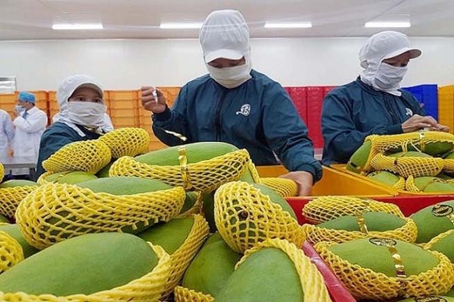 Xuất khẩu rau quả sang các thị trường khó tính tăng trưởng cao
