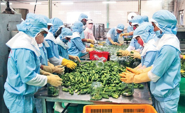 Linh hoạt xuất khẩu nông sản trong tình hình dịch bệnh