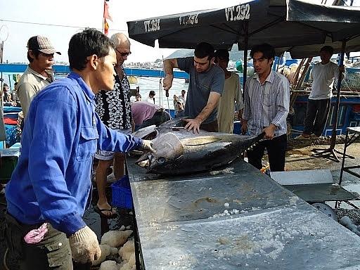 EVFTA là đòn bẩy cho cá ngừ xuất khẩu sang EU