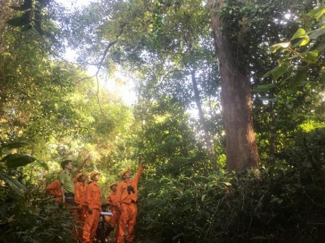 Quỹ Bảo vệ và Phát triển rừng tỉnh Hòa Bình: Đổi mới trong thực thi chính sách dịch vụ môi trường rừng