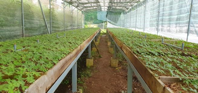Phát triển nông nghiệp công nghệ cao, nông nghiệp hữu cơ