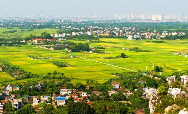 HCM City: Agricultural Production Value 5 Times Higher than National Average