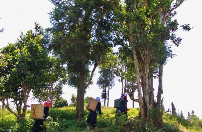 Lào Cai: Phát huy tiềm năng du lịch địa phương thông qua sản phẩm OCOP