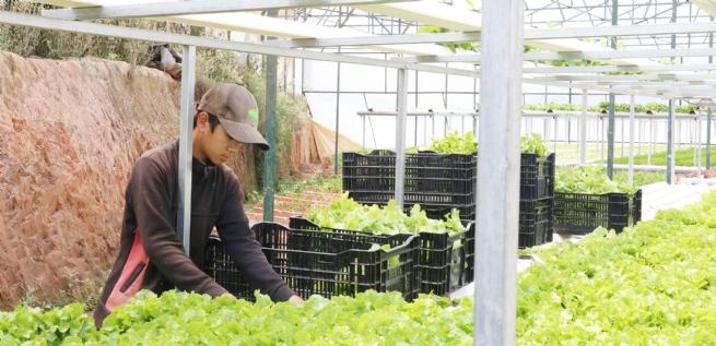 Hướng đến nông nghiệp thông minh