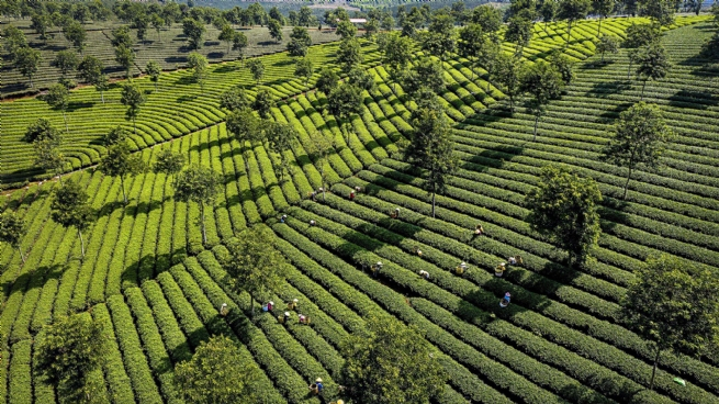 Đà Lạt: Phát triển nông nghiệp gắn với du lịch
