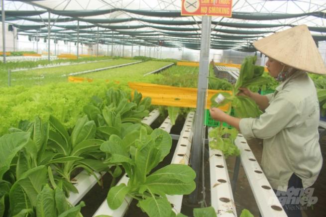 Nam Định có sản phẩm OCOP được lựa chọn đề cử xếp hạng 5 sao