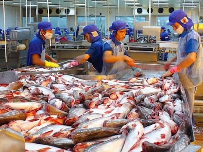 Xuất khẩu cá tra kỳ vọng phục hồi vào quý III/2020