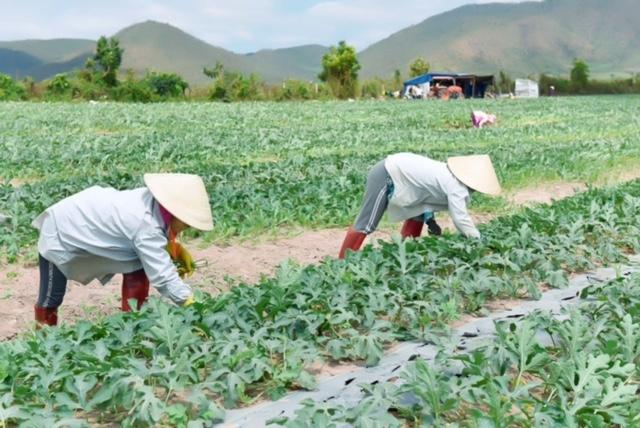 Huyện Krông Pa – Bước chuyển mình mạnh mẽ, toàn diện
