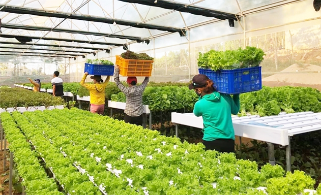Attracting Investment and Developing High-Tech Agriculture