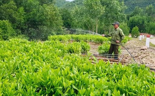 Ban quản lý Rừng phòng hộ Sơn Hòa: Phối hợp cùng người dân trồng và bảo vệ rừng