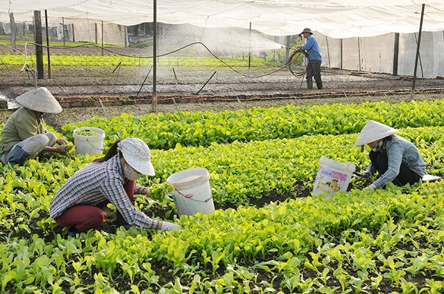 Improving Policy Access for Cooperatives