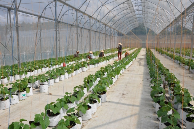 Sustainable Agricultural Development in Int'l Integration Trend