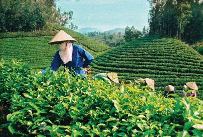 Huu Hao Tea Co., Ltd Globalizing Local Tea