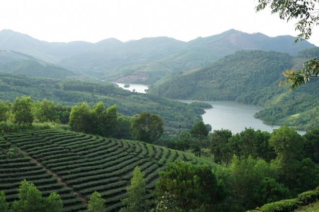 Huyện Đình Lập: Phát huy  lợi thế kinh tế đồi rừng