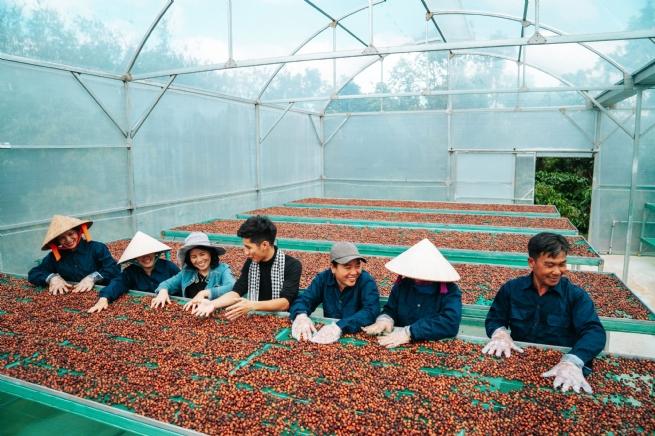 Đổi mới sáng tạo trong chuỗi  sản xuất cà phê