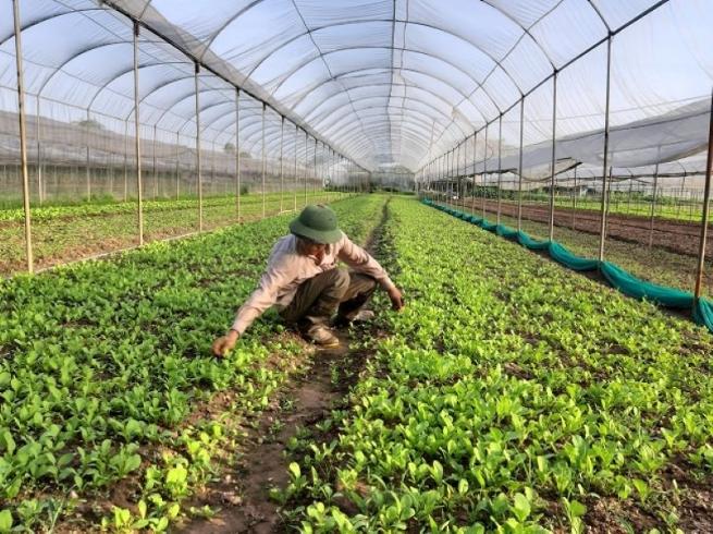 Hà Nội phát triển các chuỗi liên kết sản xuất, tiêu thụ nông sản theo hướng bền vững