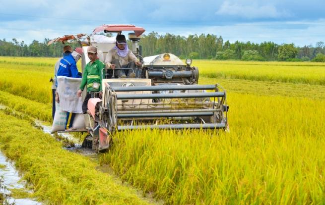 Tái cơ cấu ngành nông nghiệp đang đi đúng hướng