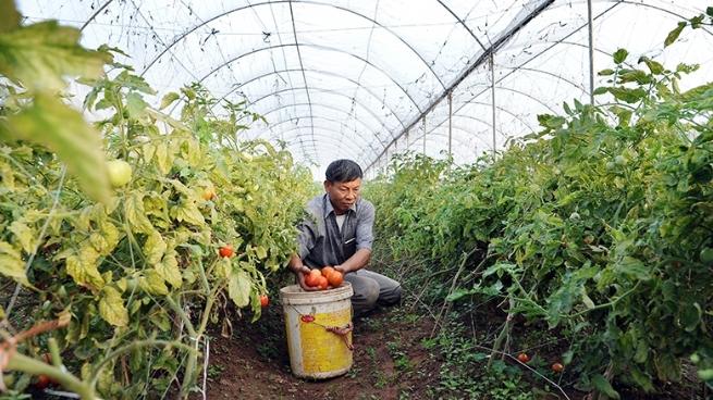 Huyện Chương Mỹ xây dựng nông thôn mới hướng đến phát triển toàn diện