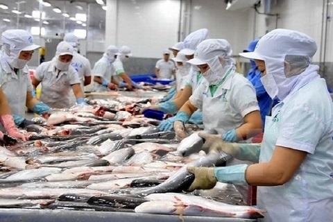 Tín hiệu vui với cá tra, cá basa Việt Nam xuất khẩu sang Hoa Kỳ